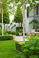 Lawn, Box edged beds, Hydrangea 'Annabelle' and Betula jacquemontii - The Glass House - Architects Terry Farrell Partners - Garden design by Sallis Chandler
