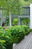 View to glass pavilion with decking, Box edged beds of  Hydrangea 'Annabelle' - The Glass House - Architects Terry Farrell Partners - Garden design by Sallis Chandler