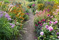 Path through summer borders. Dahlia 'Bishop of Canterbury', Persicaria amplexicaulis 'Summer Dance', Pennisetum, Helenium 'Luc', Phlox 'Purper mantel', Helenium 'Goldrausch', Helenium 'Chipperfield Orange', Foeniculum vulgare 'Giant Bronze' and Eupatorium