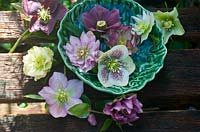 Picked Hellebore flowerheads in china bowl