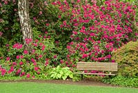 Spring garden with bench, Rhododendron spp. and hosta