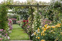 Rose covered pergola. The Long Garden, David Austin Roses, Albrighton, Staffordshire.