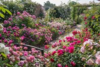 Walled rose garden. The Long Garden, David Austin Roses, Albrighton, Staffordshire.