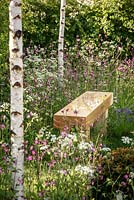 Wooden bench amongst Anthriscus sylvestris - Cow Parsley, Silene dioica - Red Champion, Hyacinthoides non-scripta - Bluebell and Betula pendula stems, 'Bringing Nature Home', show garden, RHS Malvern Spring Festival 2014