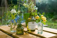 Arrangement of cut flowers from garden in small glass bottles including Myosotis - Forget me nots, Clematis, Aquilegias and Rosa banksii
