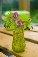 Arrangement of Geranium phaeum 'Rose Madder' flowers from garden in small glass bottle