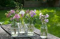 Arrangement of cut flowers from garden in small glass bottles including Aquilegia, Geranium pyrenaicum 'Bill wallis',  Bluebells and Bowles' golden grass