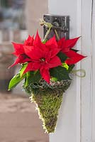 Poinsettia in wire basket hanging from door