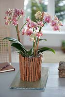 Making plant container with old yoghurt pot - finished pot planted with Orchids