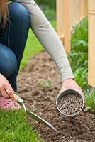 Woman planting pumpkin seedling in vegetable garden. Adding organic fertilizer.