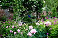 Corner of colourful and floral classic English walled garden with pink double Roses and Peonies beneath old apple tree covered in a rambling rose - Seend, Wiltshire