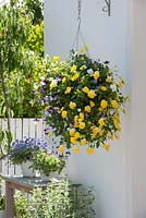 Hanging basket with colorful mixed planting including Violas - Pansy