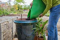 Filling large glazed French pot with compost