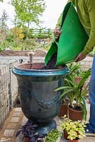 Filling large French pot with compost.