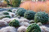 View of a border at The Winter Garden covered in frost at The Bressingham Gardens, Norfolk. January.