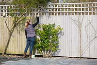 Woman painting a garden fence.