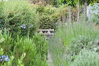 A narrow gravel path squeezes between Flowerbeds with lavender and rosemary leading to a seat. Parc-Lamp, Ruan Lanihorne, Truro, Cornwall, UK