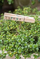 Thymus with stamped label