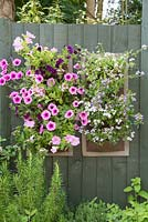 Plants include Petunia 'Pastel 2000' Surfinia series, Petunia 'Pink Vein' Surfinia series, Calibrachoa 'Purple Glow' Cabaret series, Scaevola aemula 'Topaz Pink', Nemesia 'Sky Blue' Aromatica series, Bacopa 'Double Ballerina Pink' Scopia series, Bacopa 'Colossal Pink' Abunda series and Scaevola Blue Print 'Kingscablin'.