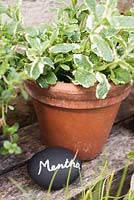 Mentha label in use