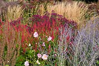 Autumn border of Perennials and Grasses, September. Ornamental grasses with pink and purple flowers.