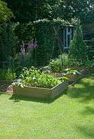 Suburban garden in summer with vegetable beds