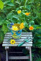 Deadheading yellow marigolds with childs seat and tools