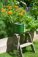 Vegetable bed with marigolds, vintage tools and watering can