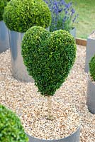 Heart shaped topiary in a metal circular container