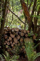 Woodpile in woodland garden with ferns