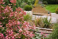 Hydrangea paniculata 'Quick Fire' - pink hydrangeas and the back of a brown metal lattice garden bench in backyard garden in autumn.