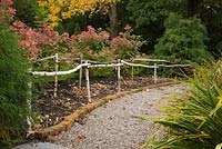 Gravel path through borders edged with red bricks and a Betula - birch tree, rustic fence in back garden in autumn.