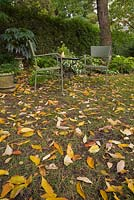Fallen tree leaves and green wicker chairs and table in a backyard garden in autumn. Hosta - Plaintain lily plants in the border