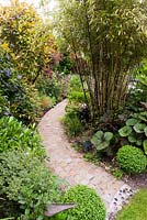 Natural stone cobble setts make a curved path which leads the eye on, framed by Buxus sempervirens spheres. Planting is Phyllostachys nigra - Black Bamboo, Ligulara 'Desdemona' with large dramatic foliage, Skimmia and Hebe line the path