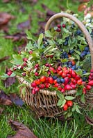 Decorative display in a basket containing Snowberry, Spindle, Dogwood, Rose hip, Hawthorn and Sloe.