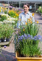 Female customer pulling a trolley of plants through a garden centre. Crocosmia and Agapanthus