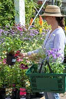 Female customer browsing plants for sale at a garden centre. Echinacea 'PowWow Wild Berry'