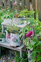 Pink and purple flowering plants including  zinnias and agastache in pots on patio