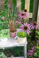 Mixed containers on painted wooden steps in autumn. Plants include Carex 'Comans Bronze', Sempervivum, Echinacea purpurea and Alchemilla mollis