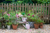 Pink and purple flowering plants in pots on patio. Plants include echinacea, zinnia, valerian, basil and agastache