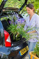 Woman placing purchased plants in the boot of her car