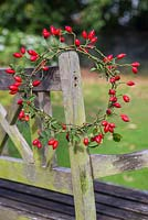 Completed rosehip wreath hanging on the edge of a wooden bench.