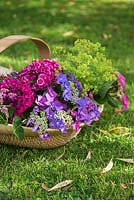 Floral arrangement of Hydrangea, Alchemilla mollis and Dianthus barbatus in a woven trug