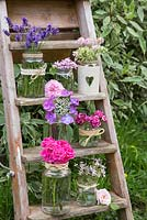 Floral display of Hydrangeas, Lavandula, Scented Pelargoniums, Dianthus barbatus and Roses on a wooden ladder
