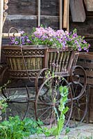Antique baby carriage with planting of petunia