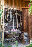 Garden tools and a horse collar on the wall of an antique wooden shed. Petunia Surfinia planted in a pram