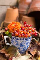 Floral display of Dahlia and Rose hips in blue and white tea cup.