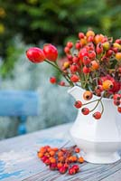 Display of various rose hips in an ornate white jug.