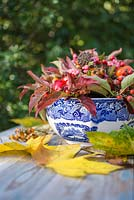 Autumnal floral display of euonymus - spindle with foliage, rose hips and hedera - ivy in a blue and white bowl