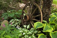Hostas 'Inniswood' and 'Sharmon' underneath a Malus domestica - Apple tree decorated with an old wagon wheel in front yard garden in summer